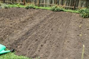 Rows dug up and ready for planting seeds