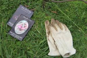 My leather gardening gloves and some of the onion seeds I planted