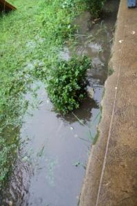 Flowerbeds with inches of water in them