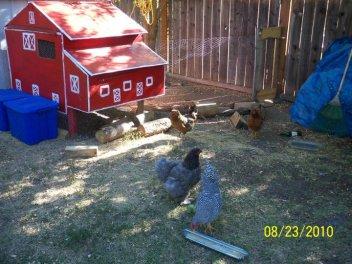spokane chicken setup
